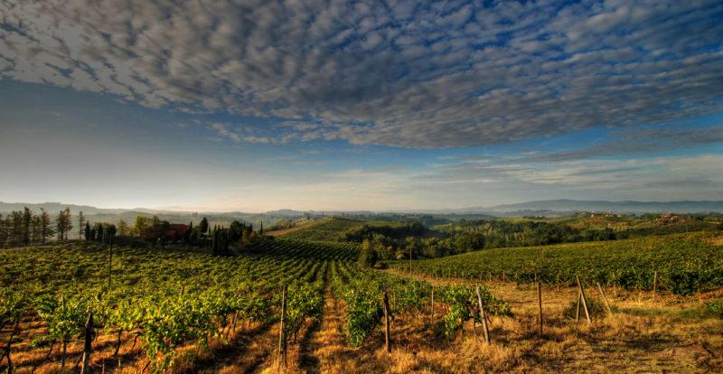 Sunset among the vineyards