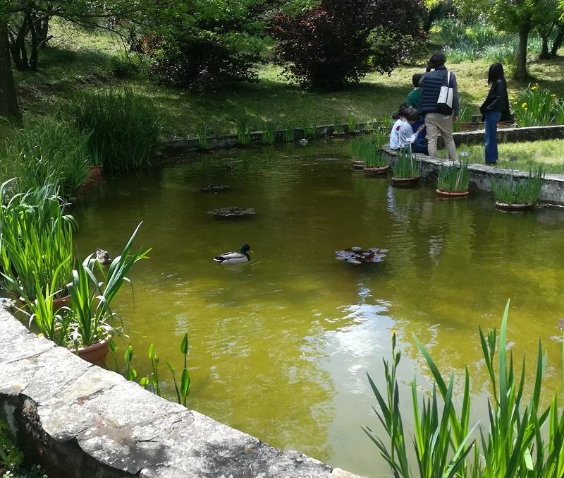 Laghetto nella parte bassa del giardino dell'iris di Firenze. I bambinbi ameranno questa sosta durante la visita.